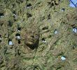 Памятник «Дерево любви»
