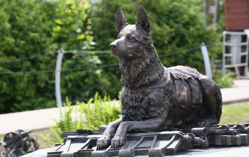Памятники животным собакам гранитные памятники фото и цены в наличие