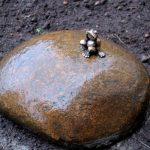 Памятник лягушке-путешественнице